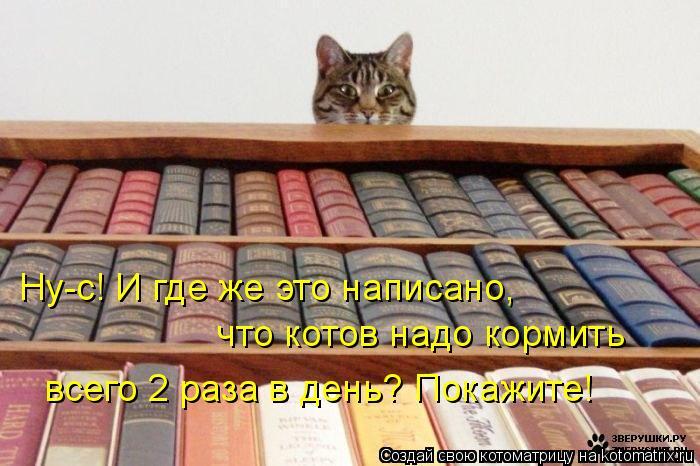 Котоматрица: Ну-с! И где же это написано,  что котов надо кормить   всего 2 раза в день? Покажите!