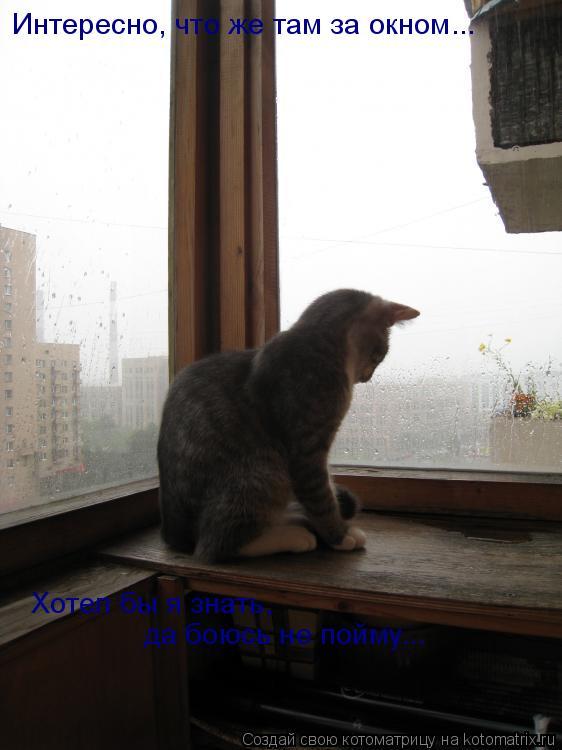 Котоматрица: Интересно, что же там за окном... Хотел бы я знать,  да боюсь не пойму...