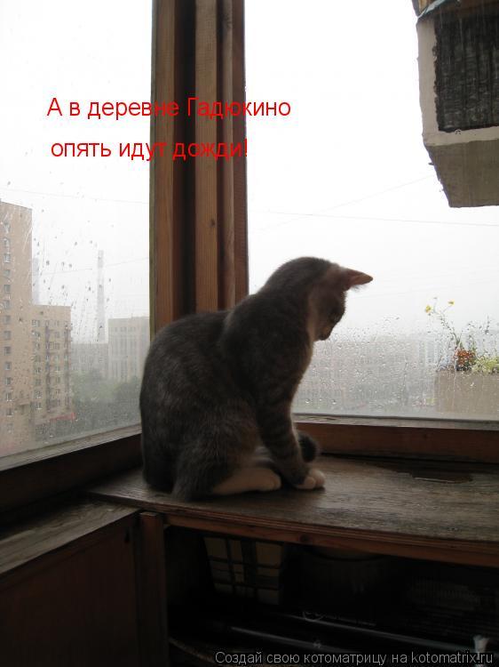 Котоматрица: А в деревне Гадюкино  опять идут дожди!