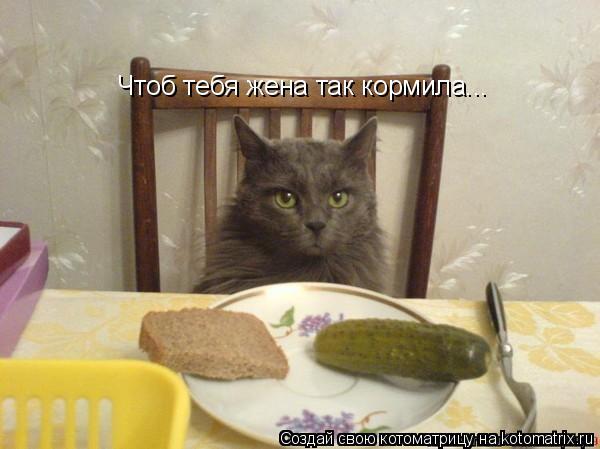 Котоматрица: Чтоб тебя жена так кормила...