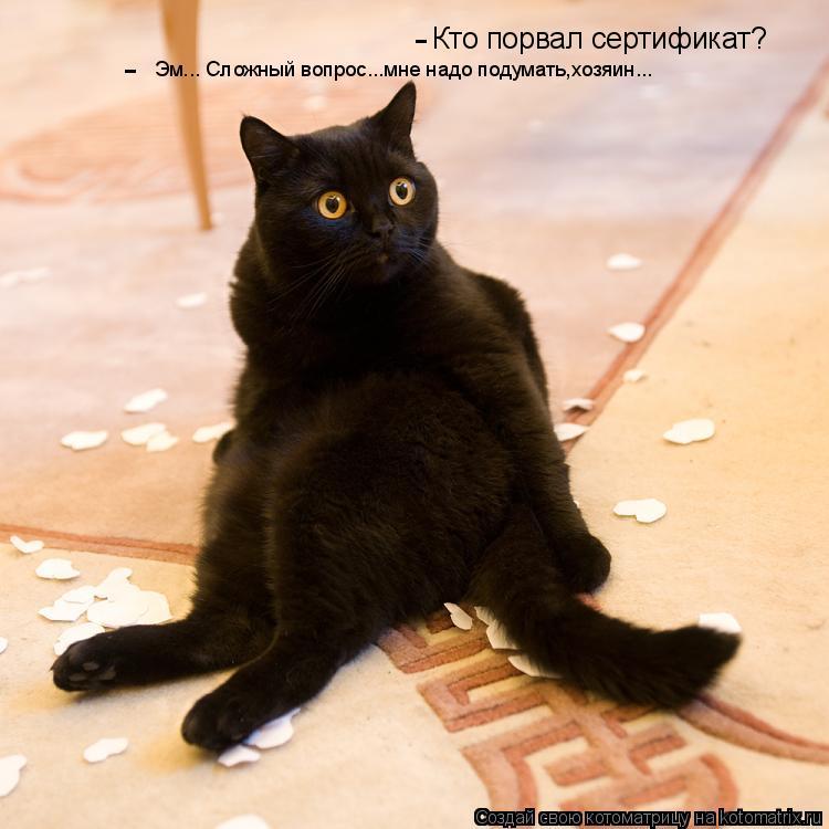 Котоматрица: Кто порвал сертификат? Эм... Сложный вопрос...мне надо подумать,хозяин... - -