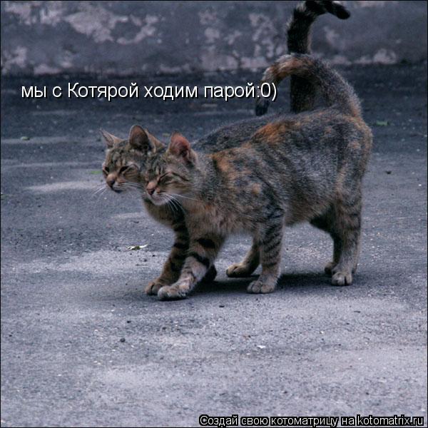 Котоматрица: мы с Котярой ходим парой:0)