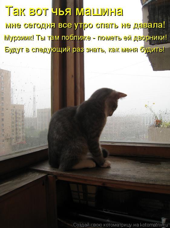 Котоматрица: Так вот чья машина мне сегодня все утро спать не давала! Мурзиик! Ты там поближе - пометь ей дворники! Будут в следующий раз знать, как меня бу