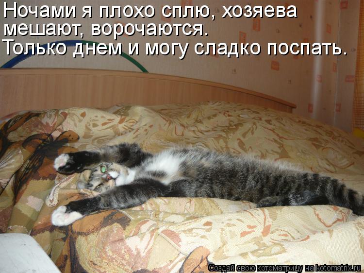 Котоматрица: Ночами я плохо сплю, хозяева мешают, ворочаются. Только днем и могу сладко поспать.