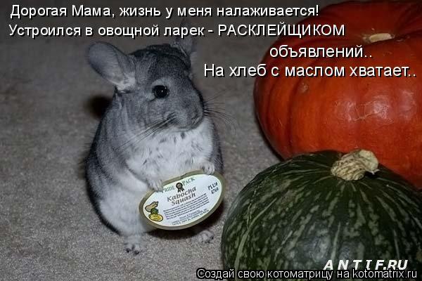 Котоматрица: Дорогая Мама, жизнь у меня налаживается! Устроился в овощной ларек - РАСКЛЕЙЩИКОМ объявлений..  На хлеб с маслом хватает..