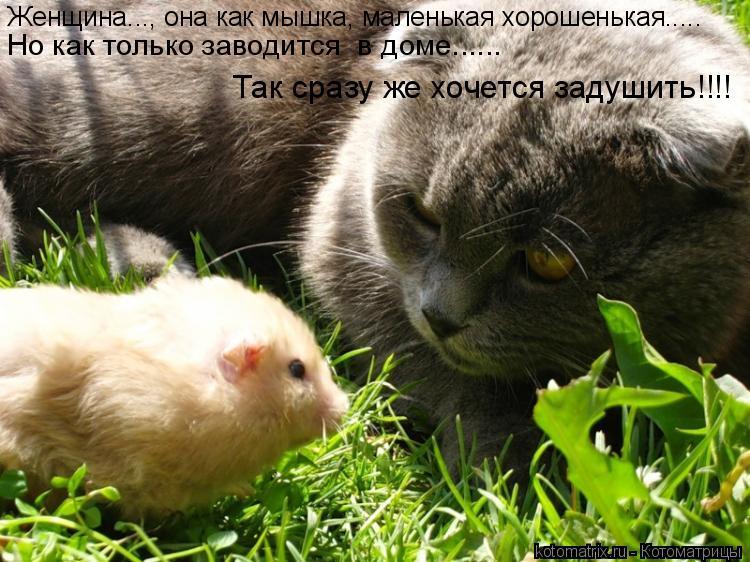 Котоматрица: Женщина..., она как мышка, маленькая хорошенькая..... Но как только заводится  в доме...... Так сразу же хочется задушить!!!!