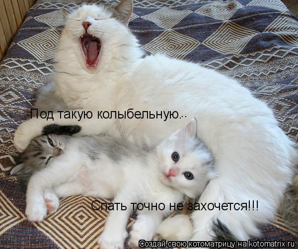 Котоматрица: -Под такую колыбельную… Спать точно не захочется!!! ..
