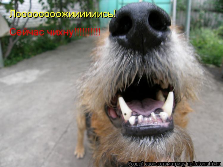 Котоматрица: Лоооооооожиииииись! Сейчас чихну!!!!!!!!!!