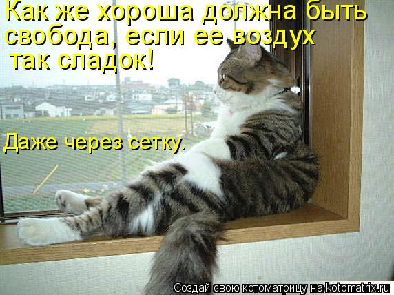 Котоматрица: Как же хороша должна быть  свобода, если ее воздух так сладок! Даже через сетку.