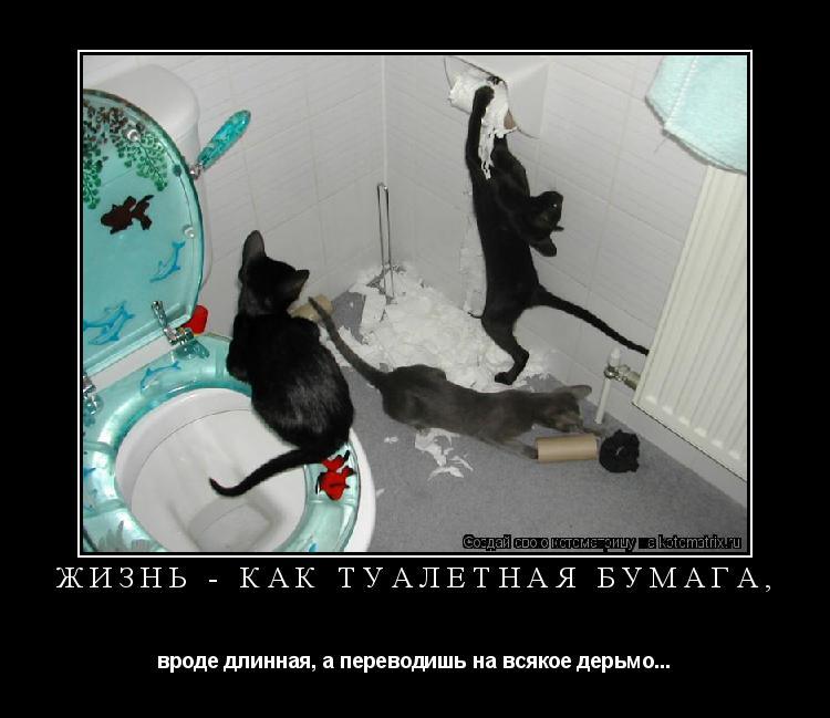 Котоматрица: Жизнь - как туалетная бумага, вроде длинная, а переводишь на всякое дерьмо...