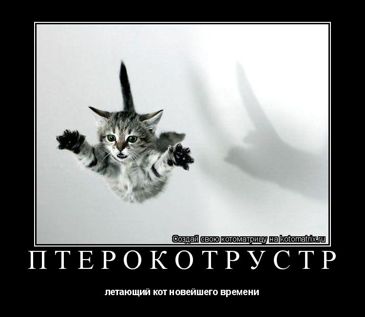 Котоматрица: птерокотрустр летающий кот новейшего времени