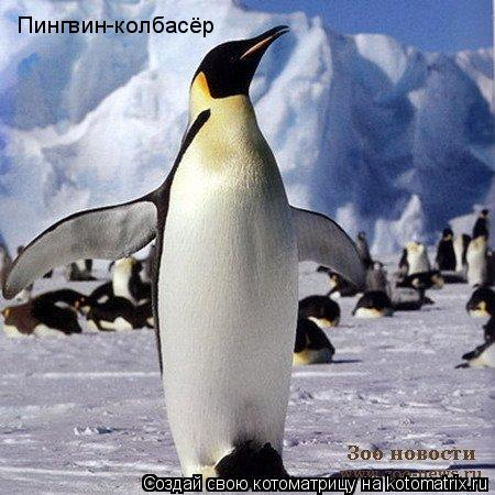 Котоматрица: Пингвин-колбасёр