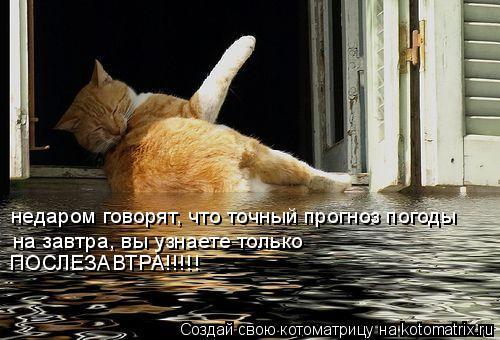 Котоматрица: недаром говорят, что точный прогноз погоды  на завтра, вы узнаете только ПОСЛЕЗАВТРА!!!!!