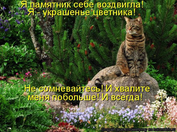 Котоматрица: Я памятник себе воздвигла! Я - украшенье цветника! Не сомневайтесь! И хвалите меня побольше! И всегда!