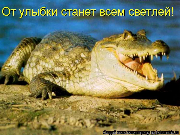 Котоматрица: От улыбки станет всем светлей!