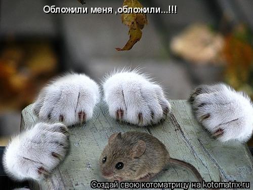 http://kotomatrix.ru/images/lolz/2009/07/21/324986.jpg