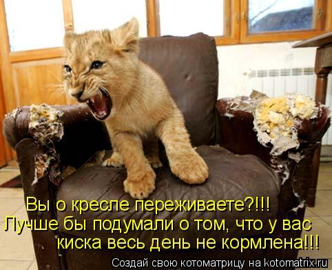 Котоматрица: Вы о кресле переживаете?!!!  Лучше бы подумали о том, что у вас  киска весь день не кормлена!!!