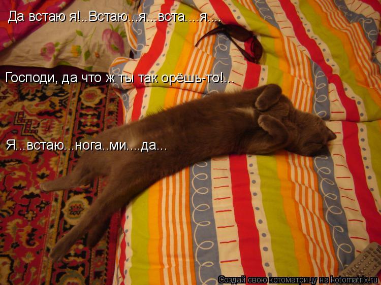 Котоматрица: Да встаю я!..Встаю...я...вста....я.... Господи, да что ж ты так орёшь-то!... Я...встаю...нога..ми....да...