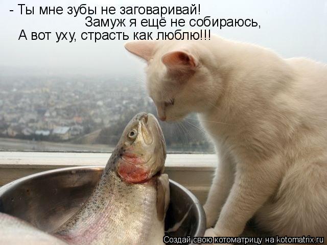Котоматрица: - Ты мне зубы не заговаривай!  Замуж я ещё не собираюсь, А вот уху, страсть как люблю!!!