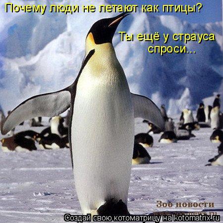 Котоматрица: Почему люди не летают как птицы? Ты ещё у страуса спроси...