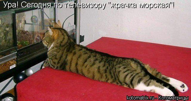 """Котоматрица: Ура! Сегодня по телевизору """"жрачка морская""""!"""