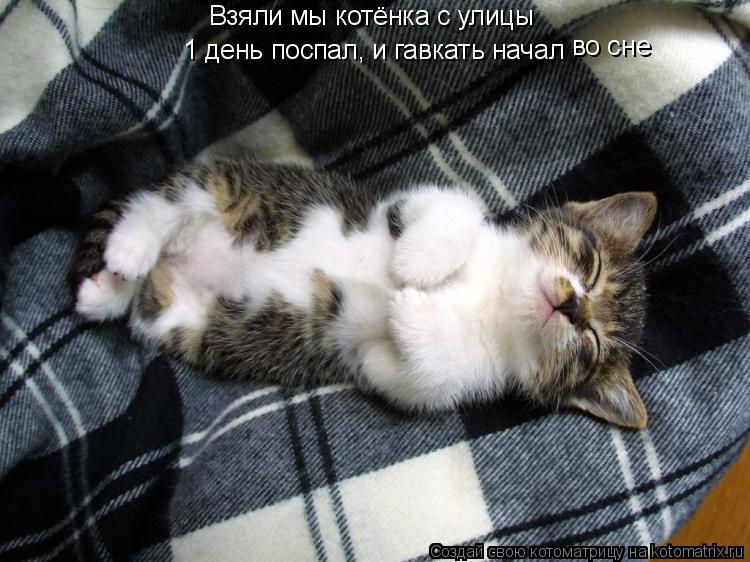 Котоматрица: Взяли мы котёнка с улицы 1 день поспал, и гавкать начал во сне
