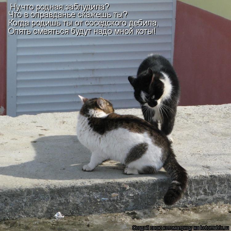 Котоматрица: Ну,что родная,заблудила? Что в оправданье скажешь ты? Когда родишь ты от соседского дебила, Опять смеяться будут надо мной коты!