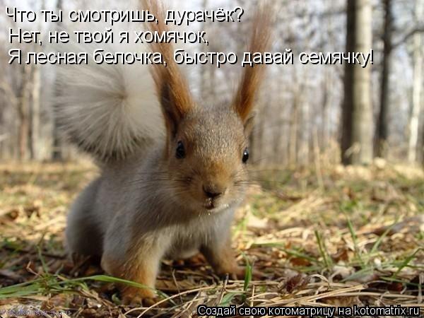 Котоматрица: Что ты смотришь, дурачёк? Нет, не твой я хомячок, Я лесная белочка, быстро давай семячку!