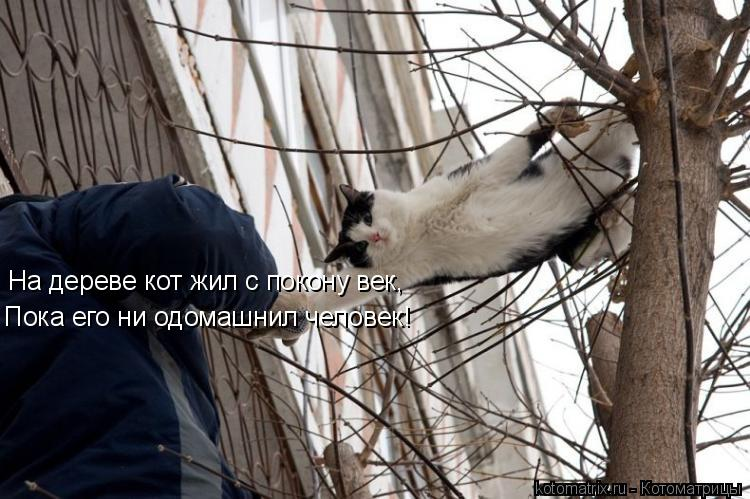 Котоматрица: На дереве кот жил с покону век, Пока его ни одомашнил человек!