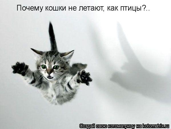 Котоматрица: Почему кошки не летают, как птицы?..