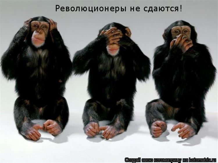 Котоматрица: Революционеры не сдаются!