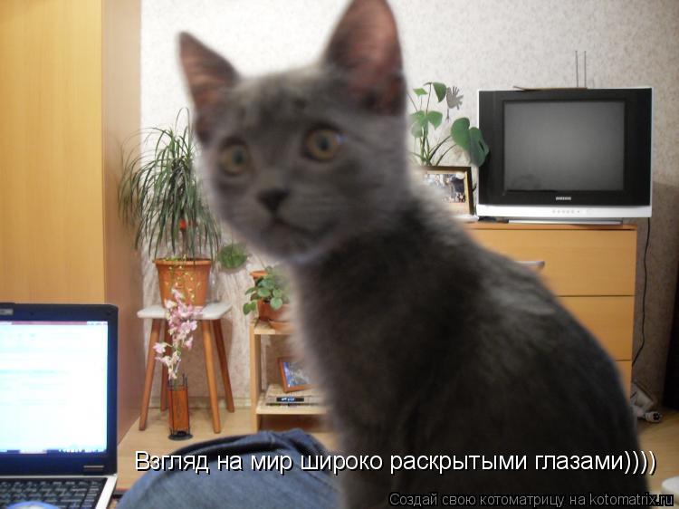 Котоматрица: Взгляд на мир широко раскрытыми глазами))))