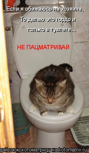 Котоматрица: Если я обижаюсь на хозяина, То делаю это гордо и  только в туалете... НЕ ПАЦМАТРИВАЙ