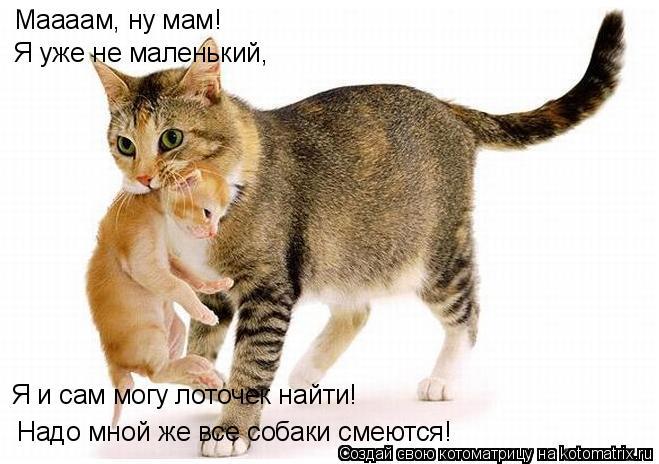 Котоматрица: Маааам, ну мам! Я уже не маленький, Надо мной же все собаки смеются! Я и сам могу лоточек найти!