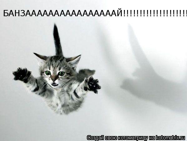 Котоматрица: БАНЗААААААААААААААААЙ!!!!!!!!!!!!!!!!!!!!!!!!!!!!!!!!!
