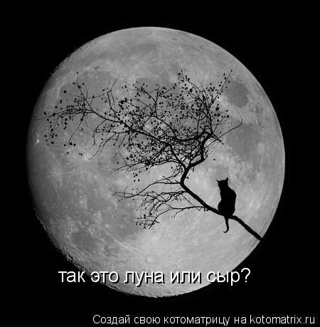 Котоматрица: так это луна или сыр?