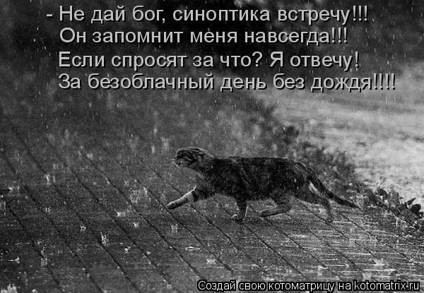 Котоматрица: - Не дай бог, синоптика встречу!!! Он запомнит меня навсегда!!! Если спросят за что? Я отвечу! За безоблачный день без дождя!!!!