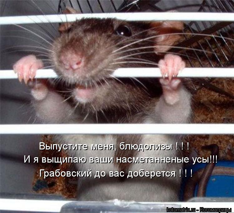 Котоматрица: Выпустите меня, блюдолизы ! ! ! И я выщипаю ваши насметанненые усы!!! Грабовский до вас доберется ! ! !