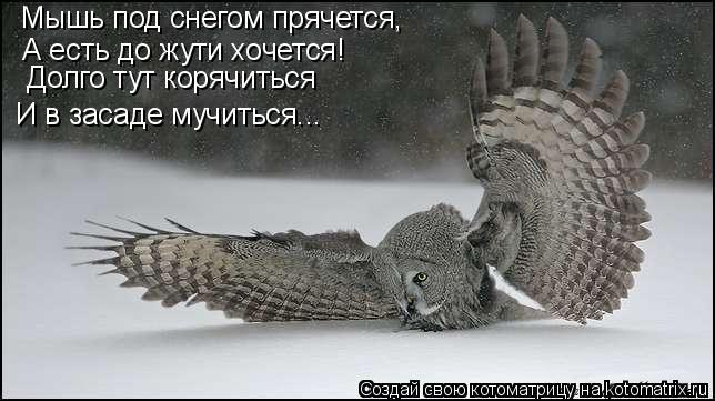Котоматрица: Мышь под снегом прячется, А есть до жути хочется! И в засаде мучиться... Долго тут корячиться