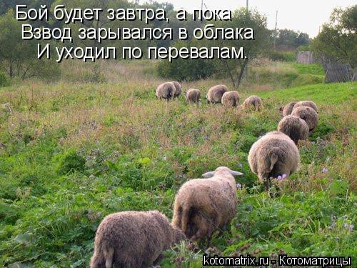 Котоматрица: Бой будет завтра, а пока Взвод зарывался в облака И уходил по перевалам.