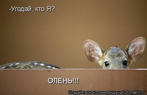 Котоматрица: -Угодай, кто Я? ОЛЕНЬ!!!