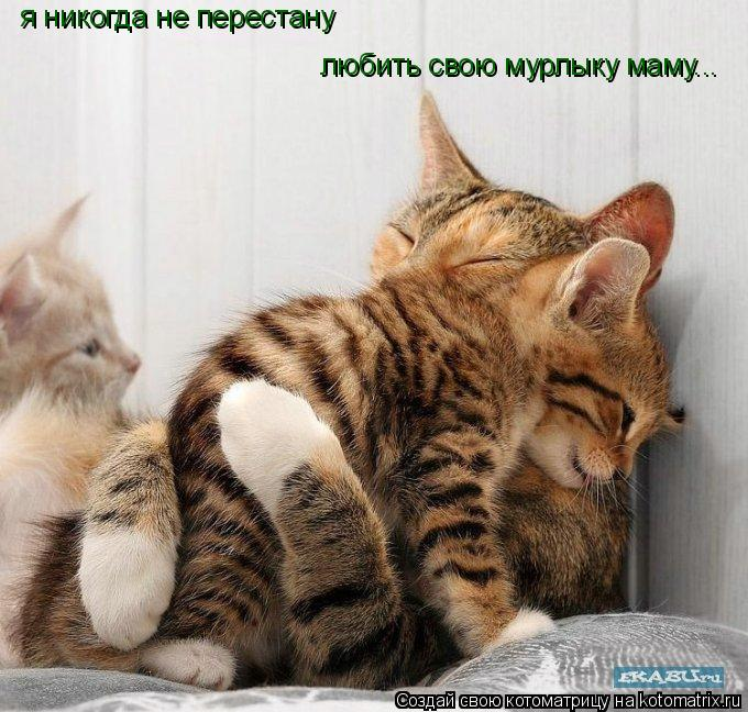 Котоматрица: я никогда не перестану любить свою мурлыку маму...