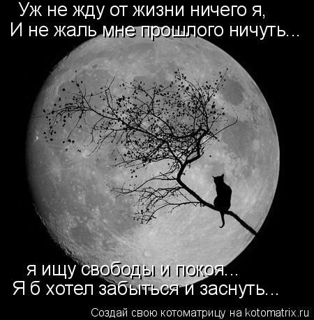 Котоматрица: Уж не жду от жизни ничего я, И не жаль мне прошлого ничуть... я ищу свободы и покоя... Я б хотел забыться и заснуть...