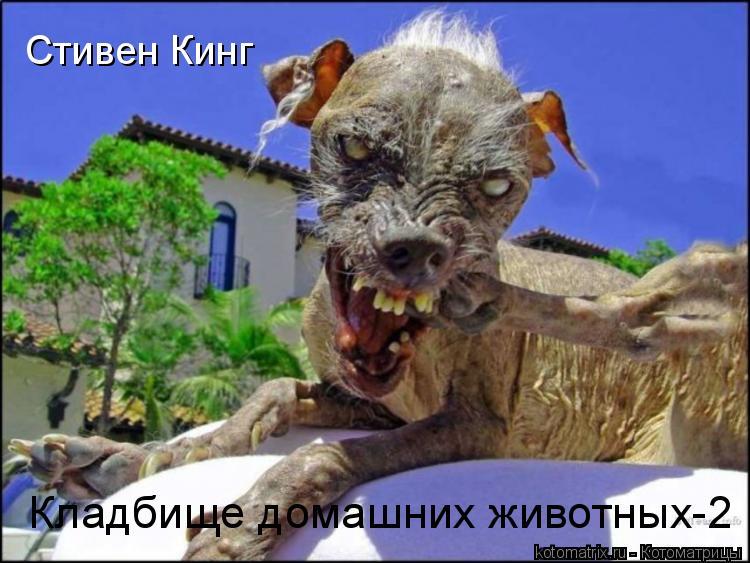 Котоматрица: Стивен Кинг Кладбище домашних животных-2