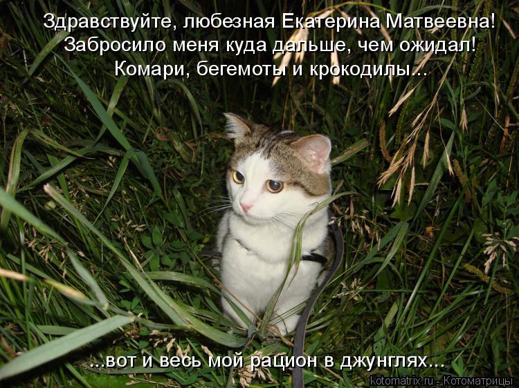 Котоматрица: Здравствуйте, любезная Екатерина Матвеевна!  Забросило меня куда дальше, чем ожидал!  Комари, бегемоты и крокодилы...  ...вот и весь мой рацион