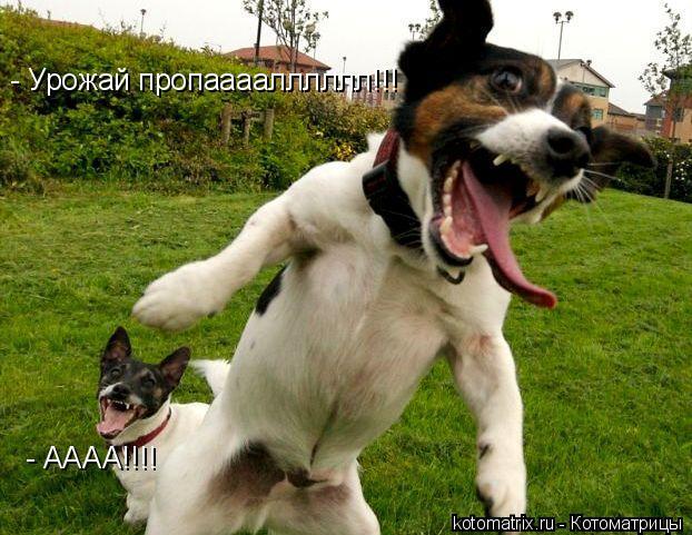 Котоматрица: - Урожай пропаааалллллл!!! - АААА!!!!