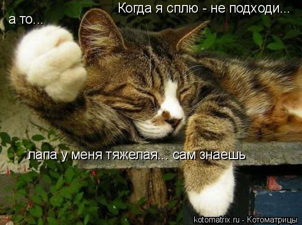 Котоматрица: Когда я сплю - не подходи...  а то... лапа у меня тяжелая... сам знаешь