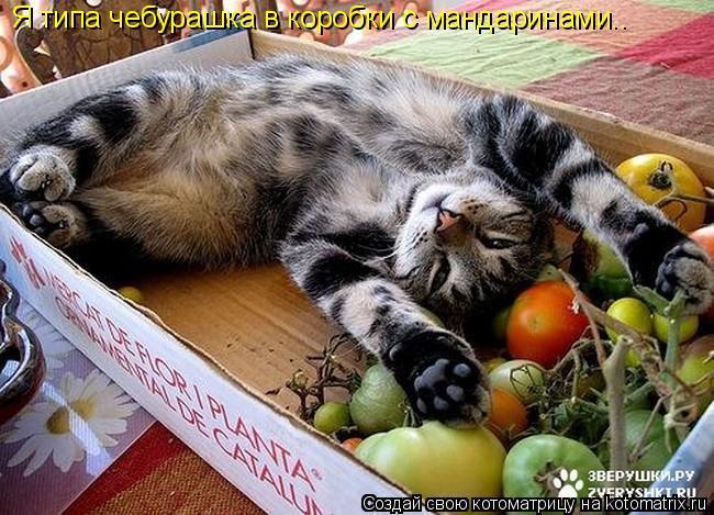 Котоматрица: Я типа чебурашка в коробки с мандаринами..