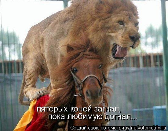 Котоматрица: пятерых коней загнал, пока любимую догнал...
