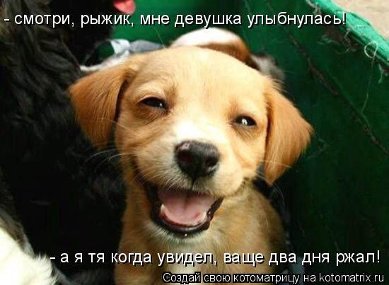 Котоматрица: - смотри, рыжик, мне девушка улыбнулась! - а я тя когда увидел, ваще два дня ржал!